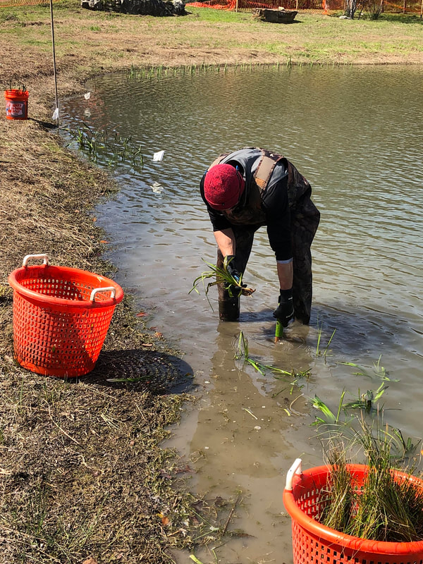 Aquatic Features, Inc.|Aquatic Plants and Algae Management Services San Marcos-San Antonio-Austin Texas-TX